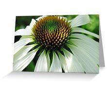 White Echinacea Coneflower Greeting Card