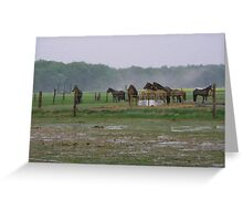 HORSE FARM ROSTOCK GERMANY Greeting Card