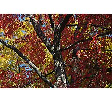 Fall Leaves in Yellow & Red Photographic Print