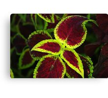 Bright Green & Red Coleus Plant Canvas Print