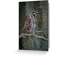 Florida Barred Owl In Spanish Moss Greeting Card