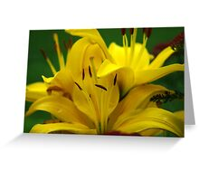 Bright Yellow Lily Flowers Greeting Card