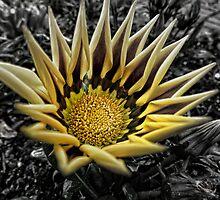 Sunshine Petals by fraser68