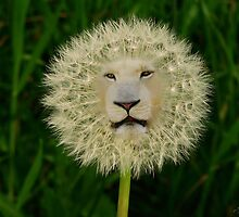 ☝ ☞DANDELION PICTURE/CARD~ DANDY LION LOL☝ ☞ by ╰⊰✿ℒᵒᶹᵉ Bonita✿⊱╮ Lalonde✿⊱╮