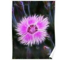 Dianthus in Disguise Poster