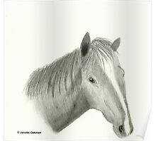 Horse - Pencil Drawing Poster