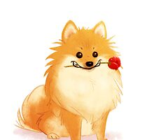 Charming Pomeranian by Chelsea Kenna