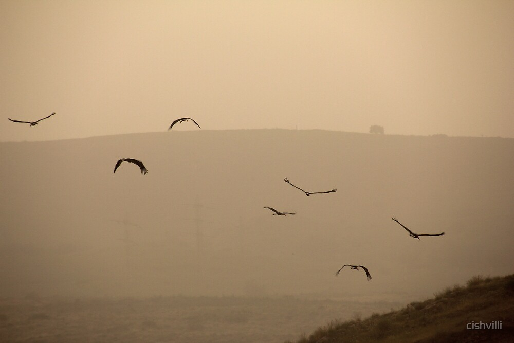 Storks by cishvilli