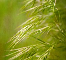 Wispy Grass by SimplyKlick