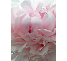 Peony before the last spring rain. Photographic Print