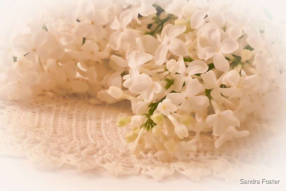 Pristine Lilacs! by Sandra Foster