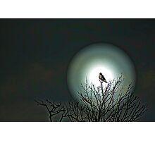 Moon Bird Photographic Print