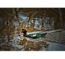 Quacked Photographic Print