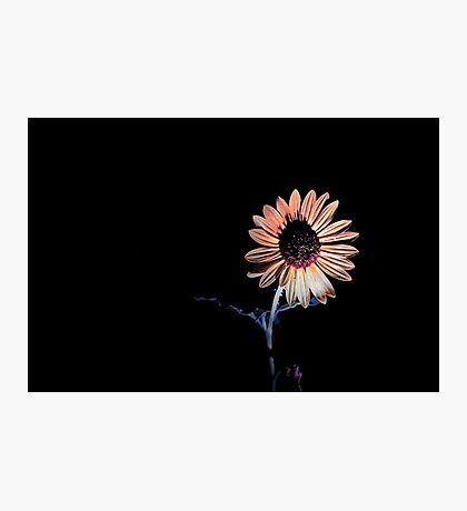 Un-Sun Flower Photographic Print
