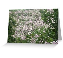 All is Lavender  Greeting Card