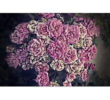 Antique Roses Photographic Print
