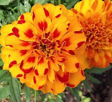 Orange by Stephanie Fay