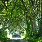 Dark Hedges  by Sean McAughey