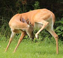 Deer Yoga by elasita
