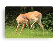 Deer Yoga Canvas Print