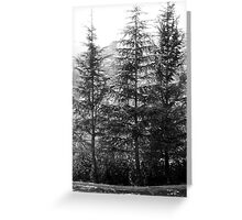 Getty Trees Greeting Card