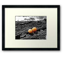 Mushrooms side by side Framed Print
