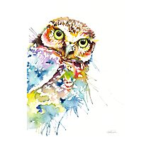 Owl Curious Photographic Print