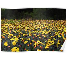 Wild Flowers in a Filed Poster