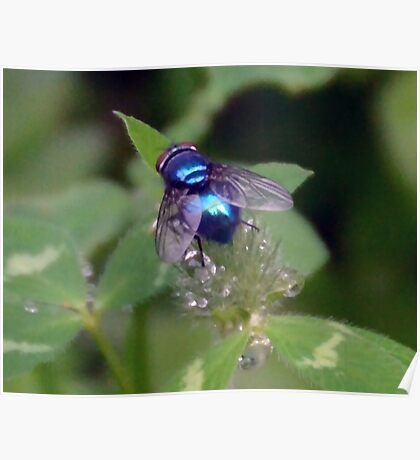 Iridescent Fly Poster