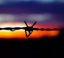Mingara Wire by Penny Kittel