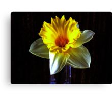 Daffodil in the dark Canvas Print