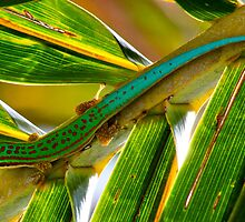 Mauritian Day Gecko on coconut palm frond - Mauritius by john  Lenagan