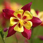 Flower Power Macro by John Dalkin