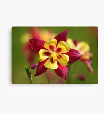 Flower Power Macro Canvas Print