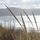 Great Ocean Dreamimg ~ Apollo Bay, Victoria by Bree Lucas