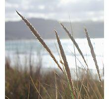 Great Ocean Dreamimg ~ Apollo Bay, Victoria Photographic Print
