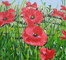 Poppies at Cleeve Hill by trinity123