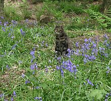 Mia in the bluebells by chelblack