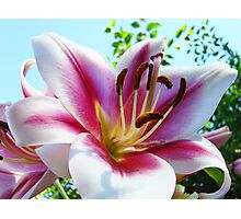 Lilies Flower Garden Art Print Pink White Lily Photographic Print