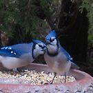 Blue Jays away by MarianBendeth