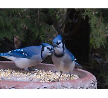 Blue Jays away Photographic Print