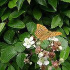 bramble butterfly by chelblack