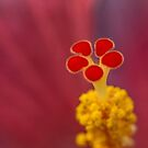 Stamen by anorth7