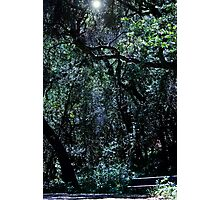 The Enlightened Bench Photographic Print