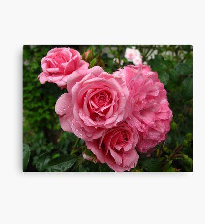 Splendiferous Roses Canvas Print