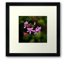 Crucifix Orchid With Raindrops Framed Print
