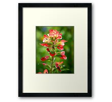 Painted With Light Close-Up Framed Print
