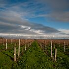 Vines at the Vale  by Tamarama72