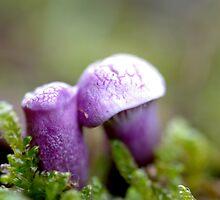 Tiny. Purple. by Helena Bolle