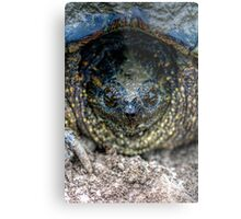 Snapping Turtle I Metal Print